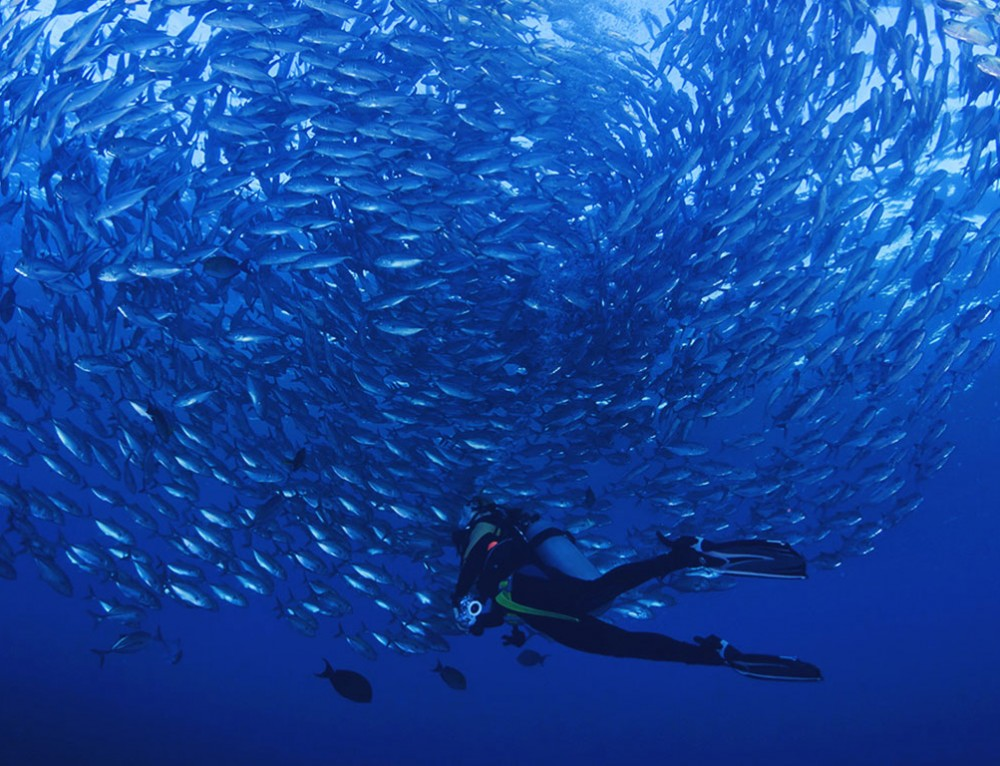 Fiji Dive Package – great combination of sites
