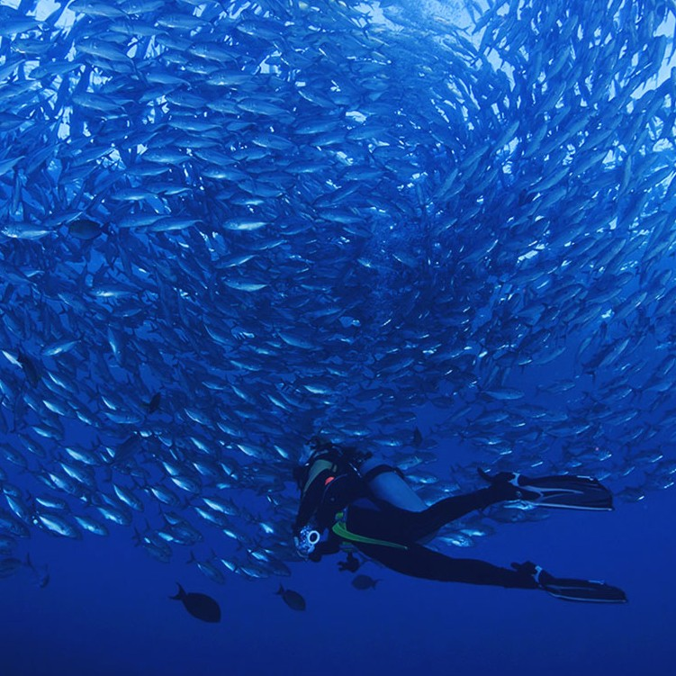 Snorkeling and Diving Courses in Fiji