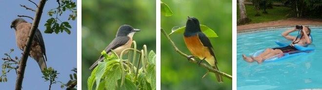 A collection of birds local to Savusavu, Fiji.