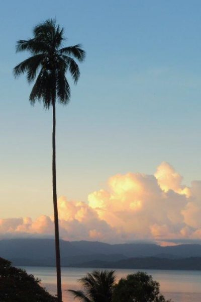 Palm trees against a sunset sky and clouds.